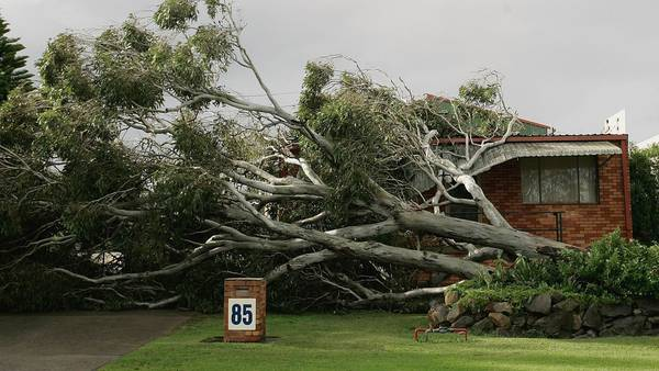If your neighbor's tree falls in your yard, who pays for cleanup?