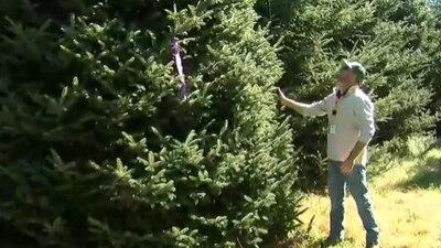 North Carolina Christmas tree headed to White House