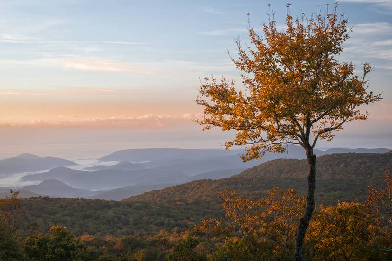 Pictured during the early morning hours of Oct. 13, this picnic spot on Grandfather Mountain, located just before Split Rock and Sphinx Rock, offers spectacular views of fall color, accompanied by the mountains and valleys below. Fall color is presently bursting on Grandfather, and the color change is steadily making its way into the lower elevations, with birches, maples and sourwoods stealing the show. Experts anticipate peak color around Oct. 20 for the WNC High Country.