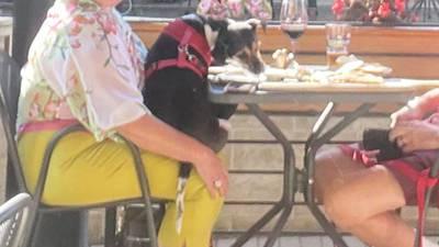 Inspector visita restaurante tras foto de perro comiendo de plato