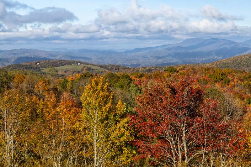 """According to Dr. Howie Neufeld, professor of biology at Appalachian State University and the WNC High Country's official Fall Color Guy, today's cold snap """"will hasten some leaf fall and get our colors to a more advanced stage in the 3,000-foot range and also extend it down to 2,000 feet now, where it is still mostly green."""""""