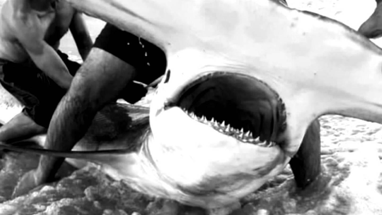 Local paramedic tackles huge hammerhead shark – WSOC TV
