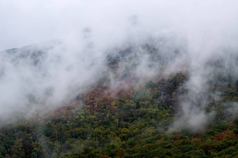 While fog typically obstructs views, during autumn, it can serve as a striking contrast for vibrant fall color, as seen here near Rough Ridge on the Blue Ridge Parkway (Milepost 302.8). Color is just starting to appear along areas of the Blue Ridge Parkway 3,500 feet and under in elevation. However, as one travels along the parkway's higher elevations, such as Rough Ridge (4,773 feet), vivid fall foliage is nearly impossible to miss.