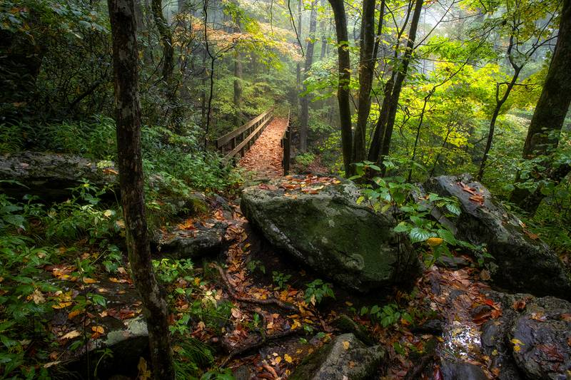 Fallen leaves line the Tanawha Trail footbridge over Wilson Creek, just off the Blue Ridge Parkway (Milepost 303.6), as the remaining greenery begins turning to gold.
