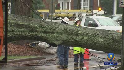Fallen tree knocks down power lines in Myers Park neighborhood