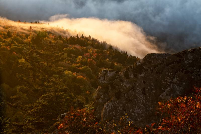 Fall color descends Grandfather Mountain's slopes, past the nonprofit nature park's upper switchbacks and into a sea of clouds below, during sunrise this morning, Oct. 11.