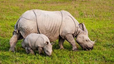 New York's Buffalo Zoo welcomes baby rhino